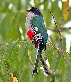 The Cuban Bird Watching Tour 8 Days 7 Nights